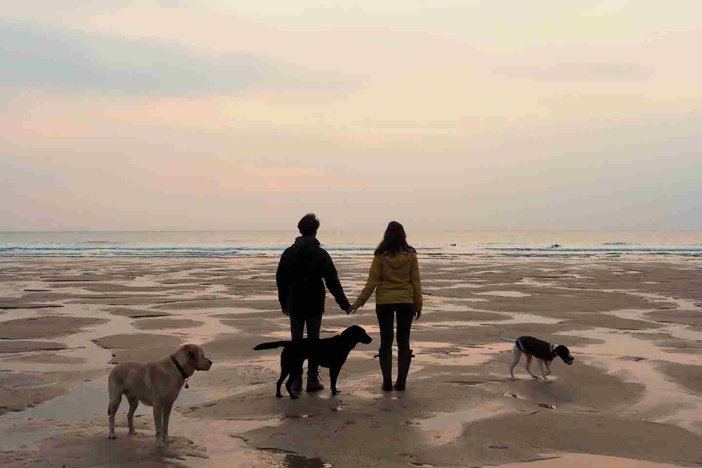 Couple-walking-dogs-on-the-beach.jpg