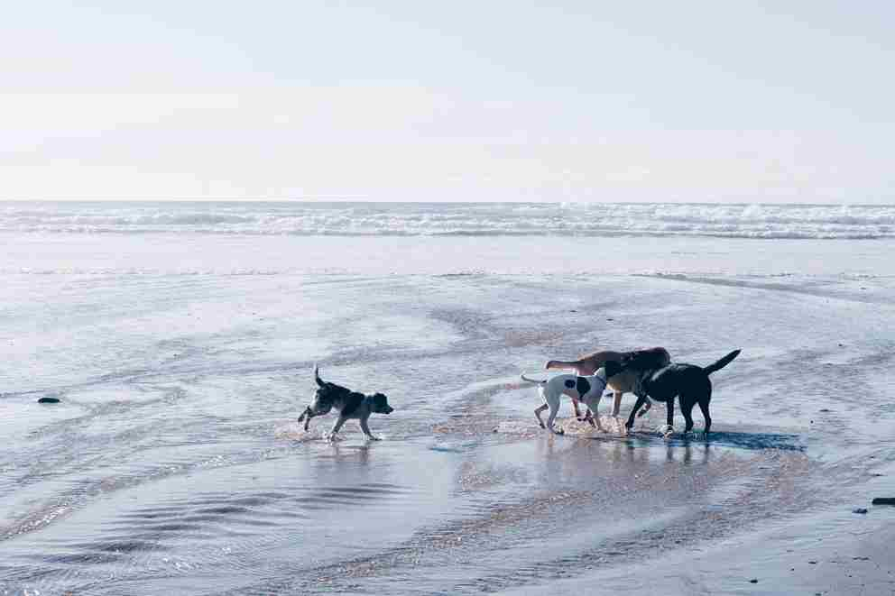 Dogs-on-Watergate-Bay.jpg
