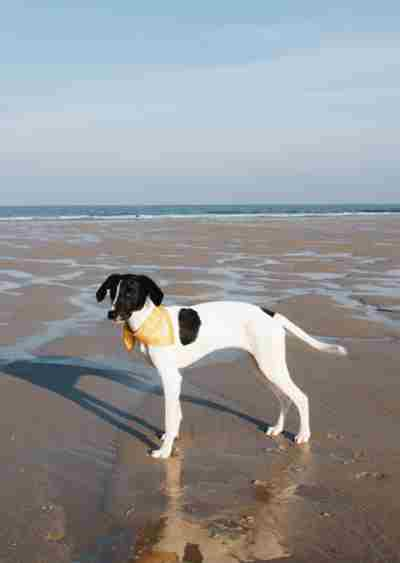 Dog-on-Watergate-Bay.jpg