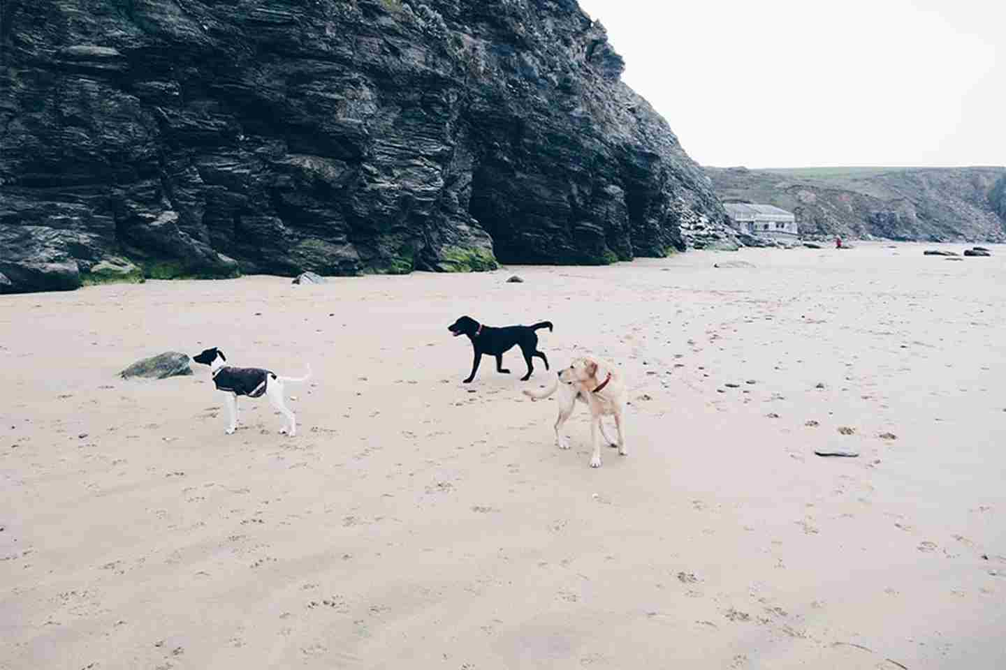 Dogs-on-the-beach.jpg